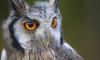 Сергей Шнуров написал стихотворение о сове