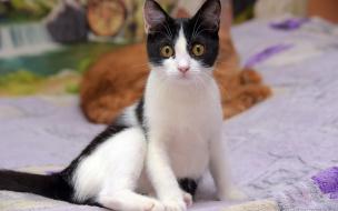 В Выборге предприниматели помогают приюту кошек в проведении благотворительных лотерей