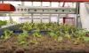 Фермеры Ленобласти вышли на лучшие показатели по выращиванию овощей за десятилетие