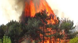 Число лесных пожаров в России стремительно растет