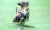 Рыбаки Ленобласти убивают нерп из-за конкуренции за водные ресурсы