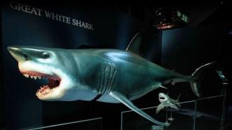 Мир акул. Глубокое погружение