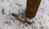 Павловский парк обратился в МВД с просьбой убрать браконьерские капканы