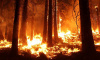 Петербуржец, живущий вАвстралии, рассказал о страшных лесных пожарах