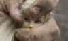 Извращенец из Нижнего Новгорода жестоко изнасиловал четырехлетнюю внучку своей возлюбленной