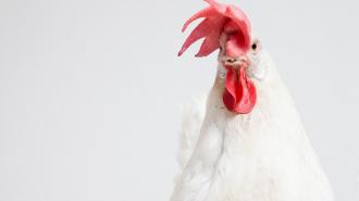 Петербургская птицефабрика судится с семьей экс-владельцев на 883 млн