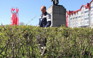 В Выборге облагородили живую изгородь вокруг памятника Ленину