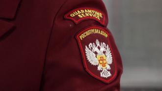 """Роспотребнадзор объяснил закрытие """"Артдокфеста"""""""