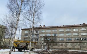 Вырубка деревьев из-за строительства храма на Крестовском острове вызвала вопросы у местных жителей