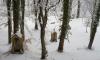 В Петербурге осудили вандалов, разрушивших 34 могилы на Смоленском кладбище