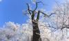 На выходных в Ленобласти выпадет первый снег