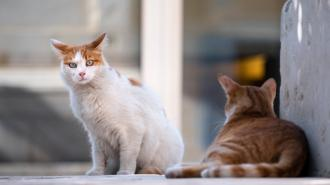 В Петербурге проведут бесплатную кастрацию бездомных кошек