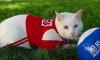 Новое предсказание от Ахилла: кот видит победу сборной Нигерии в матче с Аргентиной