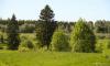 Ленинградская область признана лидером по платежам за лес