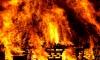 В Петербурге запретят сжигать сухую траву