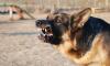 В США собаки съели своего хозяина