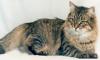 В Челябинске кошку и котят делили через суд