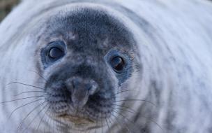 В Выборгском районе пытаются найти спасённого тюленёнка для оказания медицинской помощи