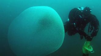 Раскрыта тайна огромных студенистых шаров у берегов Норвегии