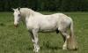 Дамочка-консул из США скакала на коне по секретным землям Камчатки