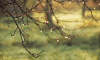 В последний день недели в Ленобласти ожидается дождь и туман
