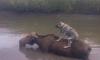 Жители Уссурийска требуют наказать директора зоопарка, который не обеспечил эвакуацию животных во время тайфуна