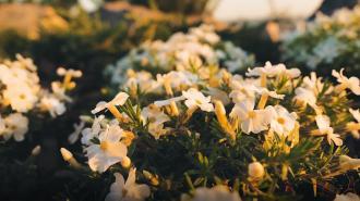 Смольный предложил разбить в Петербурге клумбы непрерывного цветения
