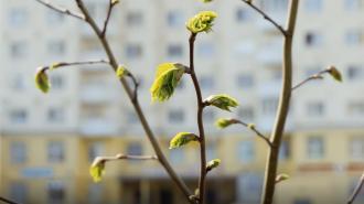 В Ленобласти 12 апреля потеплеет до +18 градусов