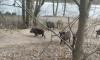 В Смольном рассказали, каких диких животных можно встретить в Петербурге