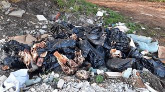 На нелегальной свалке в Ленобласти нашли коровьи головы