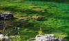 Финский залив окрасился в изумрудный цвет