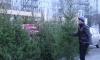 Первая новогодняя ёлка примет под свои ветви петербургских пьяниц уже на этой неделе