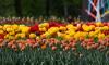 Синоптик рассказал, какими будут весна и лето в Петербурге