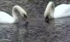 В Летнем саду демонстрируют птиц Ленинградского зоопарка