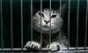 В Коми кошка пыталась пронести в колонию мобильники