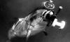 Боевики ХАМАС поймали израильского дельфина-шпиона с камерой и арбалетом