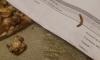 В Петербурге служба доставки привезла клиентке пиццу с мучным червем