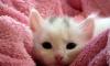 Белые коты.Белый вечер