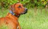 Депутаты ЗакСа предложили приравнять собак-помощников к поводырям