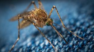 Летом Петербург ждет нашествие комаров
