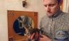 В Петербурге для спасения котенка разобрали обшивку дома