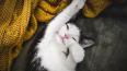 В Петербурге можно взять эрмитажных котят