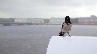 В Петербурге 8 мая воздух прогреется до +9 градусов