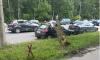 На Полюстровском дерево упало на припаркованный автомобиль