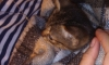 Прохожие, полиция и МЧС спасли котика, застрявшего под капотом машины