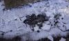 Колпинский школьник спас из ледяной воды девочку и ее собаку