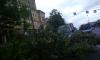 На Московском проспекте упавшее дерево стало причиной пробки