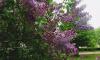 В Ленобласти 25 мая воздух прогреется до +19 градусов