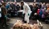 Жирафа из зоопарка Копенгагена застрелили и скормили львам на глазах у посетителей