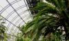 Из-за прорыва замерзает оранжерея Таврического сада